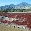 Drying chilli in the Andes, Peru